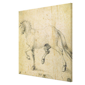 Horse, 1503 (pen and ink on paper) canvas print