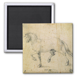 Horse, 1503 (pen and ink on paper) magnet