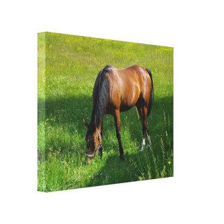 Horse #1 canvas print