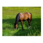 Horse #1 postcard