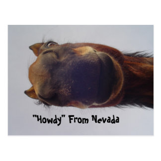 Horse 1 postcard
