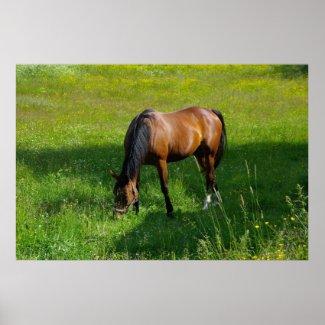 Horse #1 Print print