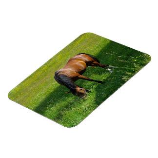 Horse #1 rectangular photo magnet
