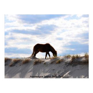 horse 2, Assateague Island State Park Postcard