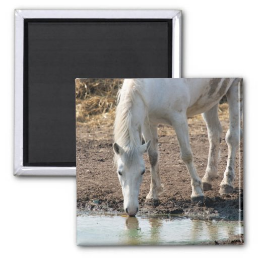 Horse 2 Inch Square Magnet
