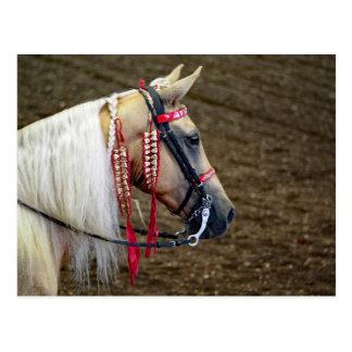 Horse 658 postcard