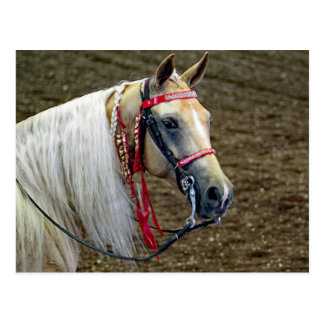 Horse 662 postcard