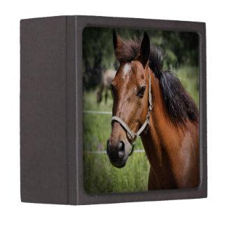 Horse 8674 premium trinket box