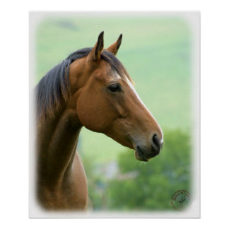 Horse 9A81D-05 Poster