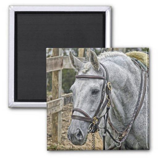 "Horse ""Ace"" Rescue horse Magnet"