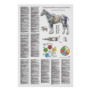 Horse Acupuncture Point Location Poster
