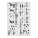 Horse Anatomy Poster Skeletal and Muscular