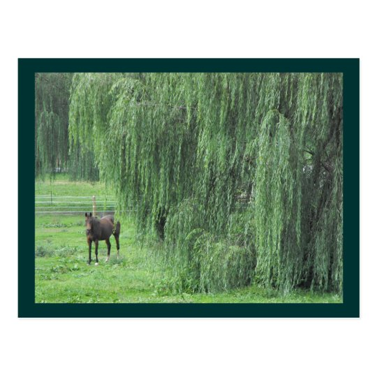 ~ Horse and a Willow ~ Postcard