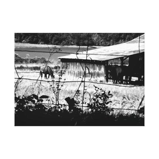 Horse and Barn Canvas Print