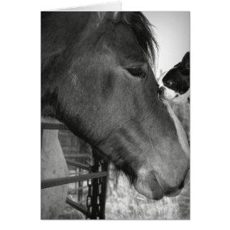 Horse and Boston Terrior Card