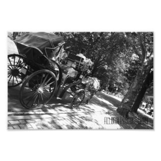 Horse and Carriage Photographic Print
