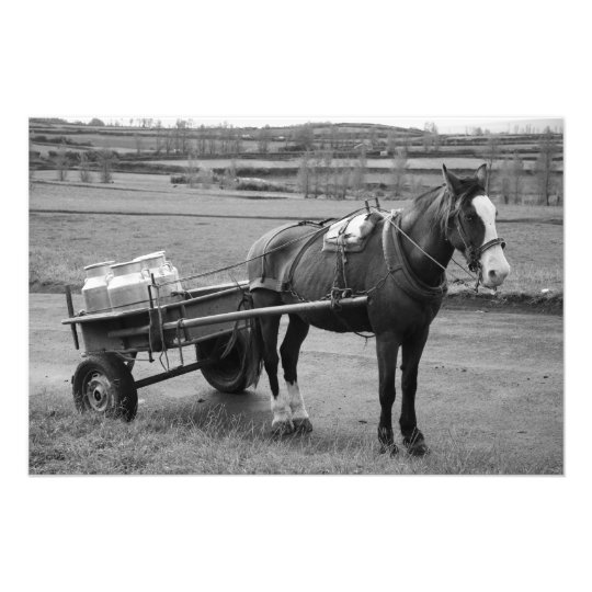 Horse and Cart Photo Print