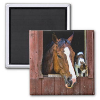 Horse and Cat 2 Inch Square Magnet