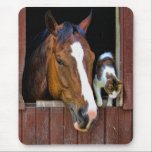 "Horse and Cat Mouse Pad<br><div class=""desc"">Horse and Cat</div>"