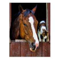 Horse and Cat Postcard