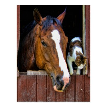 AnimalsGalore Horse and Cat Postcard