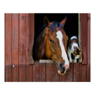 Horse and Cat Poster