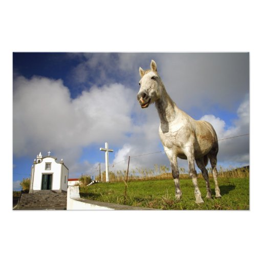 Horse and chapel photo
