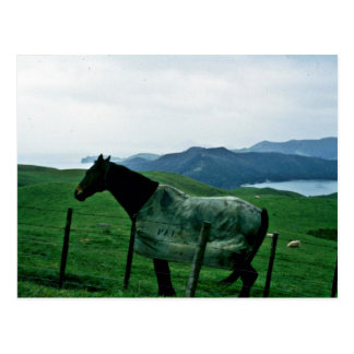 Horse And Coastline, Coromandel Peninsula Postcards
