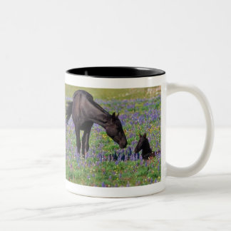 Horse and Colt in Wildflowers Field Coffee Mugs