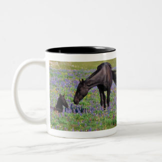 Horse and Colt in Wildflowers Field Two-Tone Coffee Mug