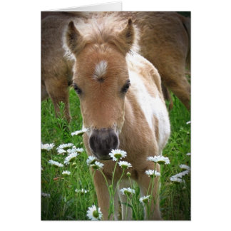 Horse and daisies card