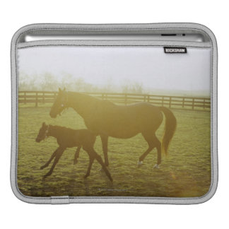 Horse and foal running in pasture sleeve for iPads
