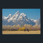 "Horse and Grand Tetons, Moose Head Ranch Placemat<br><div class=""desc"">Horse and Grand Tetons,  Moose Head Ranch,  Grand Teton National Park,  Wyoming,  USA | Michel Hersen / DanitaDelimont.com</div>"