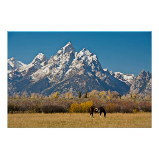 Horse and Grand Tetons, Moose Head Ranch Poster