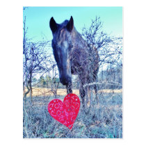 Horse and  Heart Postcard
