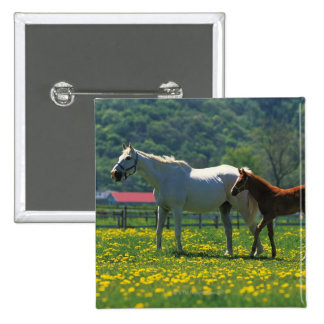 Horse and her foal standing in a field 2 inch square button