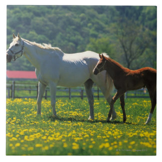 Horse and her foal standing in a field tile