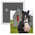 Horse and stone barn in rural England Button