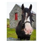 Horse and stone barn in rural England Post Cards
