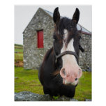 Horse and stone barn in rural England Poster