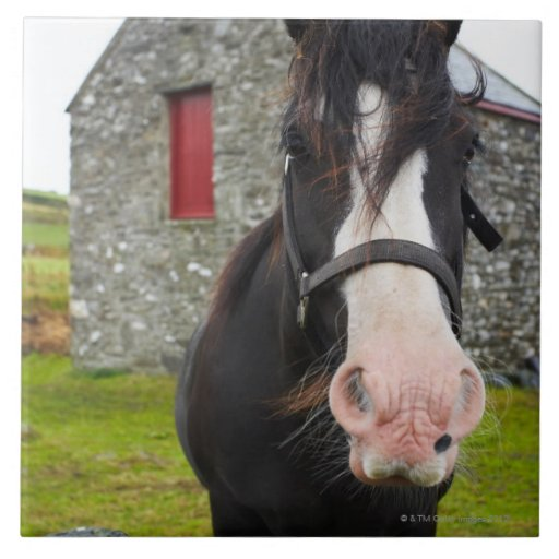 Horse and stone barn in rural England Ceramic Tiles