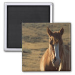 Horse and Western Background 2 Inch Square Magnet