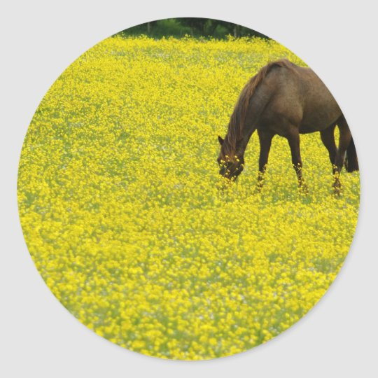 horse and yellow flowers classic round sticker