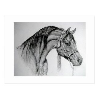 horse Arab ian Postcard