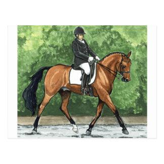 Horse Art Dressage Horse Bay Trotting Postcard