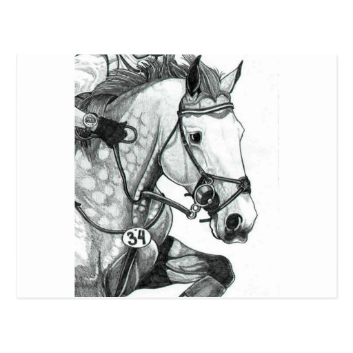 Horse Art EXTREME EVENTING Postcard