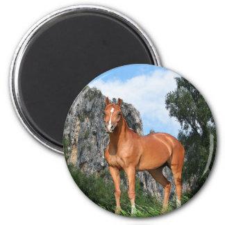 Horse art magnet