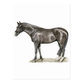 Horse Art Postcard