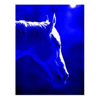 Horse At Night - Horse In Moonlight Postcard
