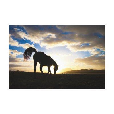 Horse at sunrise canvas prints